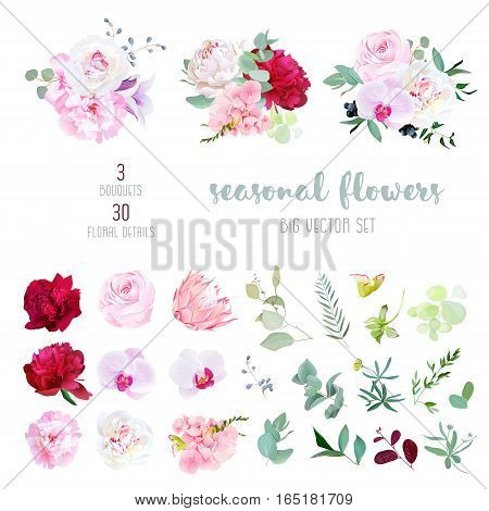 Pink rose white and burgundy red peony protea violet orchid hydrangea campanula flowers and mix of seasonal plants and herbs big vector collection. All elements are isolated and editable.