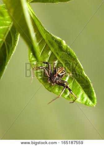 Spider Resting On Leaf