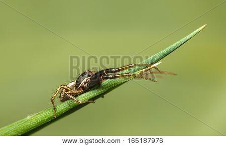 Spider On Grass Top