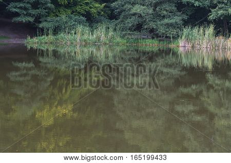 Idyllic calm pond landscape in the forest. Trees and plants are reflected in the water.