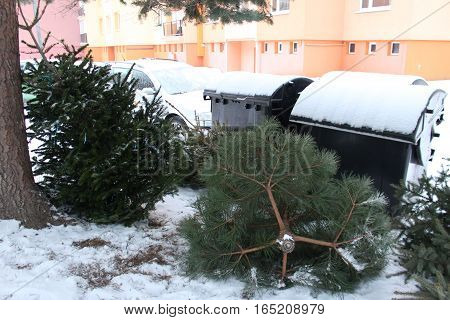 Discarded Christmas tree - Christmas is over/Old discarded Christmas trees by waste container.