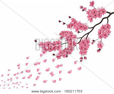 Japanese sakura. Lush the branch of dark pink sakura blossom in the wind . Isolated on white background. Vector illustration