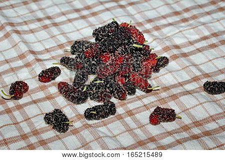 Black Ripe Mulberries Keep From The Garden