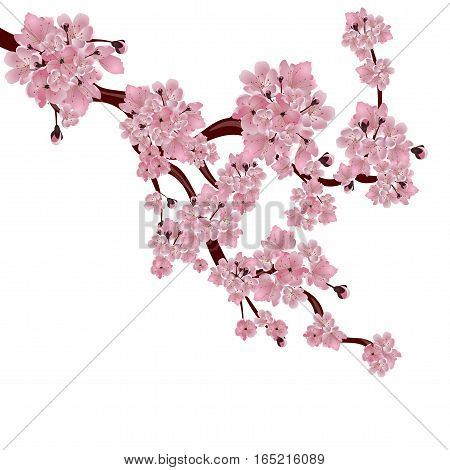 Lush Japanese cherry tree. The branch of pink sakura blossom. Isolated on white background. Vector illustration