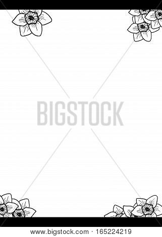 Narcissus Flowers design element, hand drawn vector background. Black and white