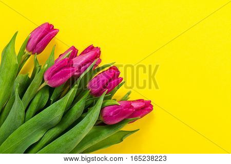 Fresh beautiful lila tulips on yellow colorful background. Spring concept. Horizontal top view with copy space.