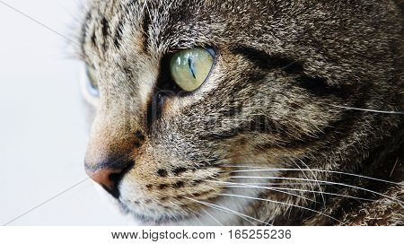 Tabby cat closeup with a blurred background.