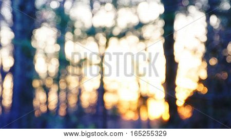 Abstract forest at twilight, natural blurred sunset