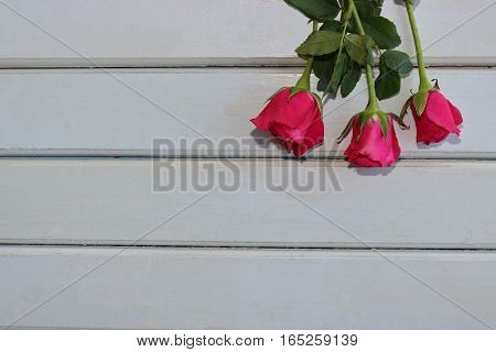 Top view of roses on white wooden board with copy space background for valentines day concept.