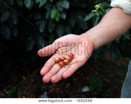 Fresh Coffee Beans On Hand
