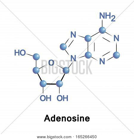 Adenosine is a purine nucleoside composed of a molecule of adenine attached to a ribose. It plays a role in biochemical processes, such as energy transfer as well as in signal transduction cAMP.