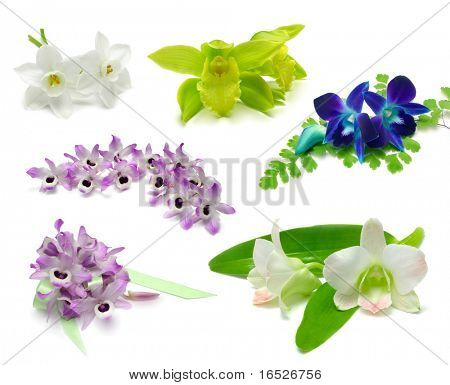 Exotic Flower Sampler with clipping paths