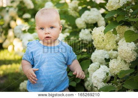 Little boy standing on a background of white flowers