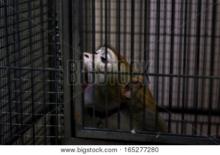 a monkey in captivity, expressions of sadness and hatred