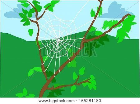 White cobweb on a tree branch. Green hills.