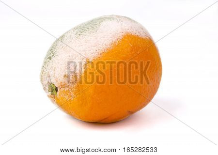 Mouldy orange on a white background rotten fruit