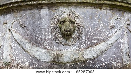 Lion Head In Florence, Italy
