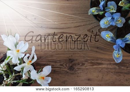 Wooden Background With German Text Gartenzeit Means Garden Time. Sunny Spring Flowers Like Grape Hyacinth And Crocus. Aged Or Vintage Style