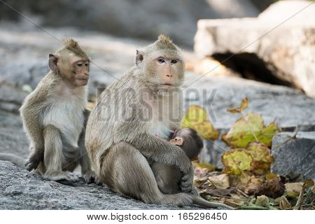Image of monkey sitting on nature background.