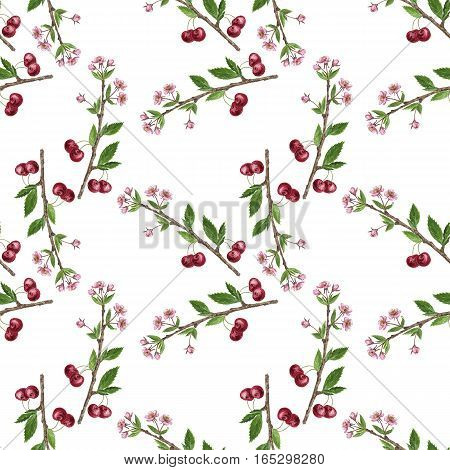 seamless pattern with cherry tree branch with berries, leaves, buds and flowers drawing by watercolor, hand drawn natural background