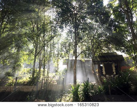 Natural sunlight at the top of Phu Chee Per mountain in Mae Hong Son Thailand behind the tree in northern part of Thailand in the morning time and blank copy text space