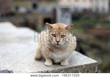 Sad red cat sit on the street. Animals in Italy