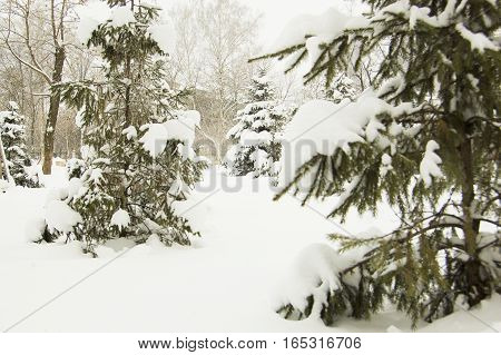Winter forest trees covered with snow winter landscape