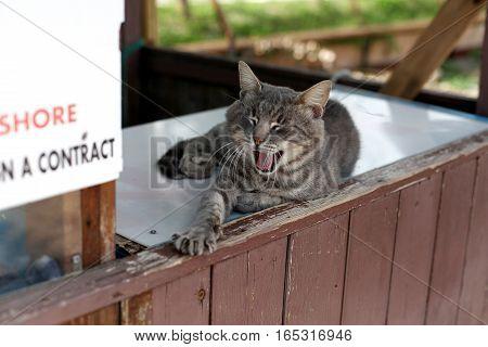 Street cat lies and yawns. Italia animal