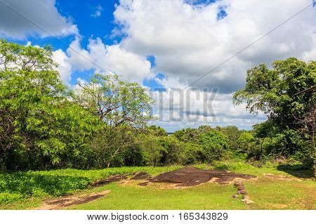 Scenic landscape of lush trees and beautiful sky in Sri Lanka