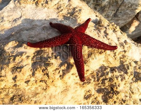 Athens, Greece , red starfish on the rocks