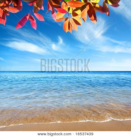 Beautiful seashore with calm cristal clear water and tree branch.