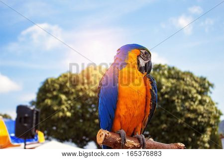 Colorful birds on branches with the blue sky.