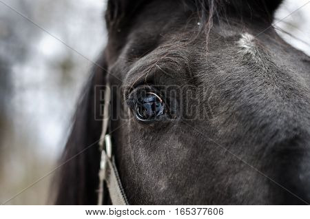 horse's eye when photographing winter shoot horses