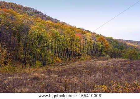 Golden forest near marzoaia village in moldova