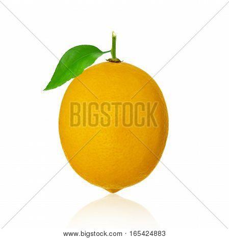 One lemon fruit with leaves isolated on white background