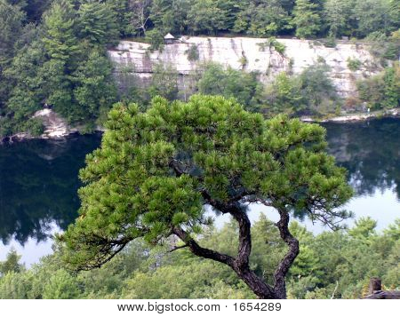 Mohonk Mountain Lake Tree