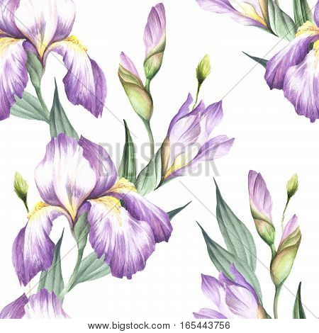 Seamless pattern with iris. Hand draw watercolor illustration.