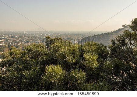 Los Angeles Cityscape W8A0331
