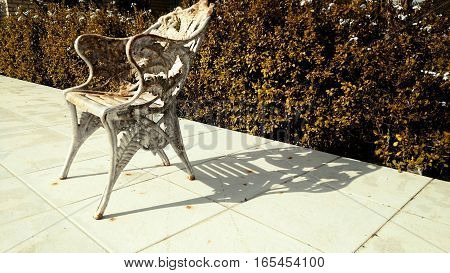 Chair antique autumn garden leaves yellowish shade