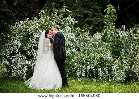 Elegant Wedding Couple In Love Background Bush With White Flower.