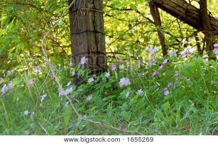 Wildflowers At Fence