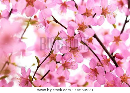 Abstract Pink Flowers Blossom on the White