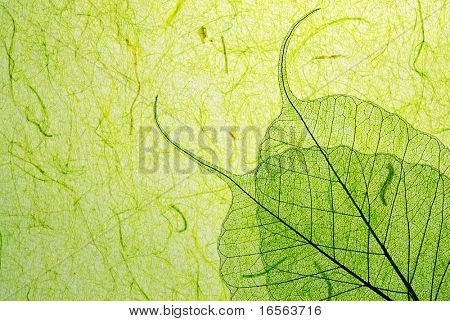 Green leaf on plant fibre background.