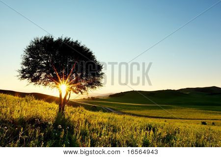 Solitary tree in golden sunset with copy space.