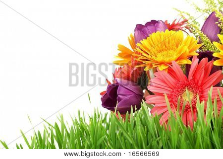 Spring flowers with fresh grass isolated on white background