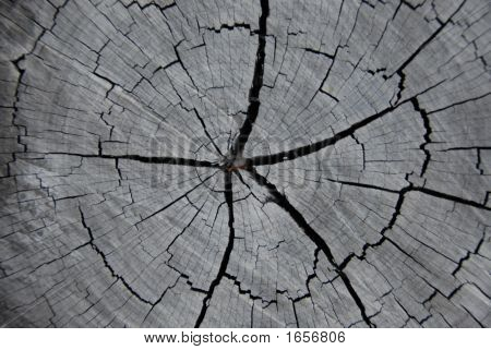 Hardwood texture tree stump weathered