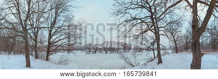 oak grove in winter. all in the snow.