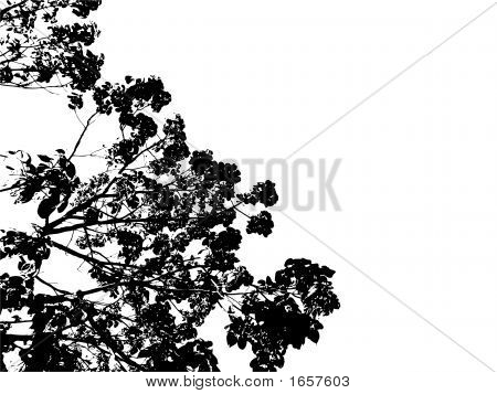 Silhouette Tree And Leaves