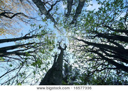 Árboles en el bosque desde el suelo del bosque