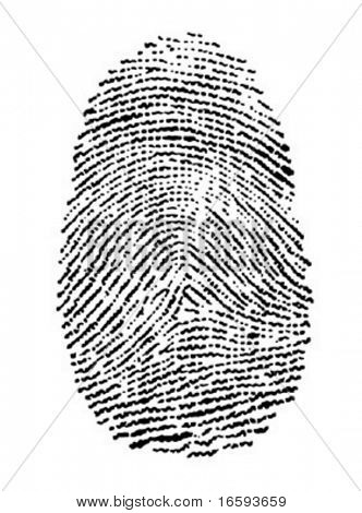 vector illustration of a fingerprint
